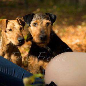 hunde schauen auf babybauch bei schwangerschaftsshooting im herbst in forchheim