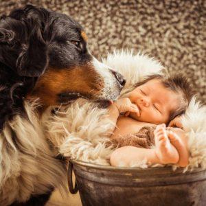 neugeborenen shooting daheim baby mit hund fotografin in erlangen-hoechstadt